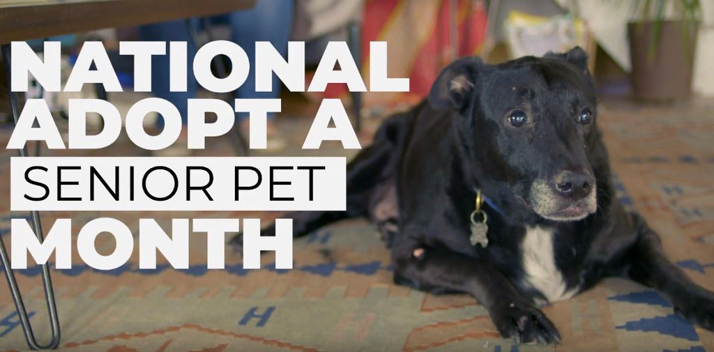 Support National Adopt a Senior Pup Month!