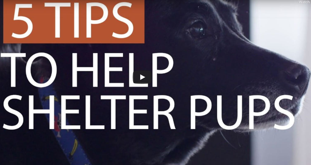Five Tips for Helping Shelter Pups!