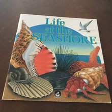 Load image into Gallery viewer, Life at the Seashore -educational