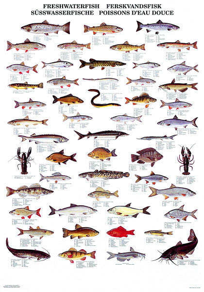 Freshwater Fish Poster Coastal Nets Online Store
