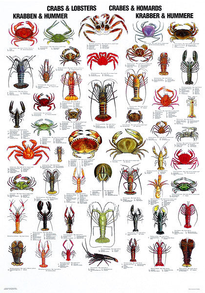 Crab and Lobster Poster – Coastal Nets Online Store