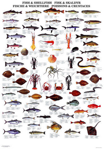 Fish & Shellfish Poster