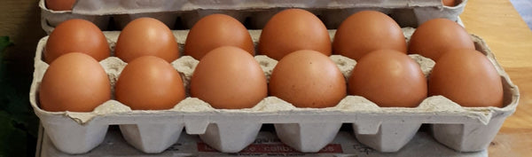 Maple Shade - Free Range Non GMO Eggs (ea)