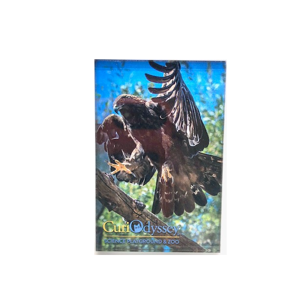 Golden Eagle Acrylic Magnet