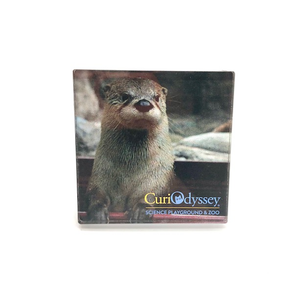 River Otter Acrylic Square Magnet