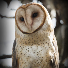 Load image into Gallery viewer, Adopt a Barn Owl