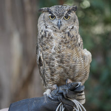 Load image into Gallery viewer, Adopt a Great Horned Owl