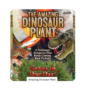 Amazing Dinosaur Plant Grow Prehistoric Evergreen