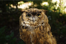 Load image into Gallery viewer, CuriOdyssey Great Horned Owl Adult/Youth Face Mask