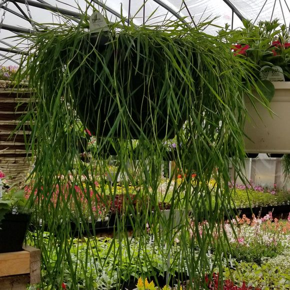 Bamboo Grass Hanging Basket 14