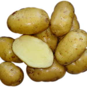 Bintje Seed Potato