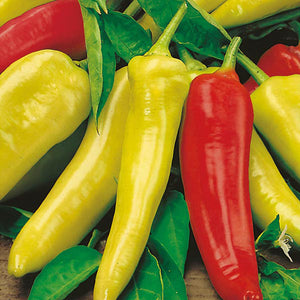 Hot Hungarian Wax Pepper - 4 PK
