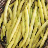 Livingston Bean Seed