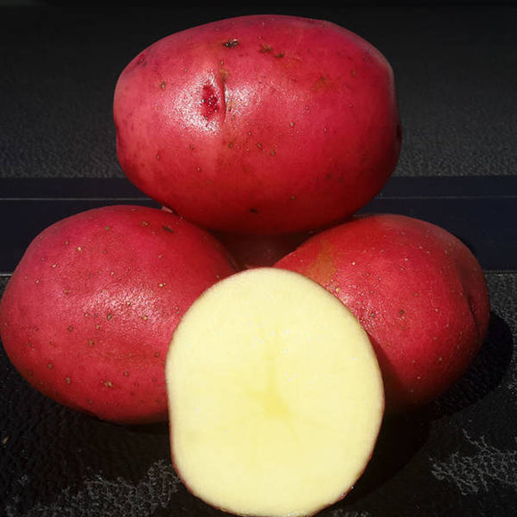 Norland Seed Potato