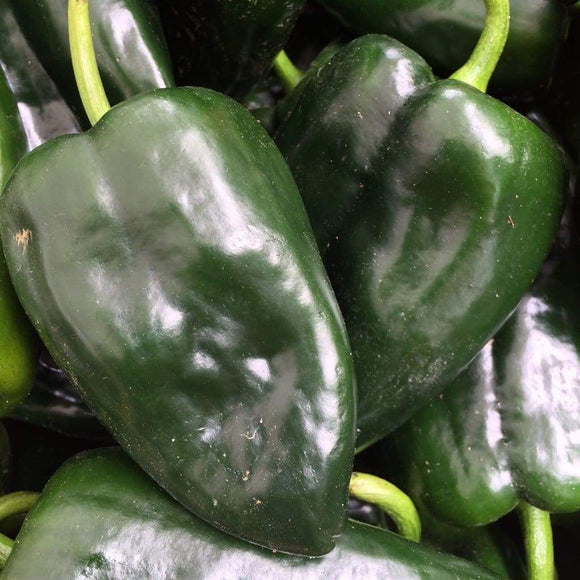 Poblano Pepper - 4 PK