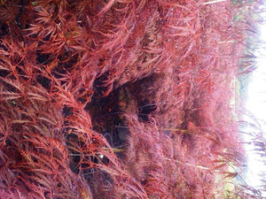 Acer - Crimson Wave 25 ltr