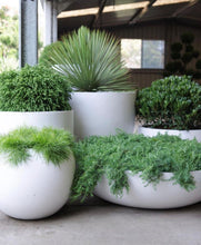 Load image into Gallery viewer, Shallow bowl planters