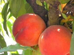 Peach - Super Dwarf Valley Red
