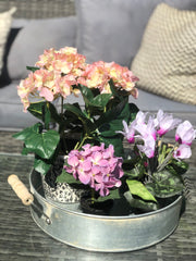 Faux Hortensia in pot - 3 colours