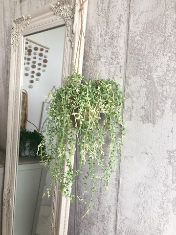 hanging greenery in pot