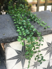 Mini leaf trailing spray