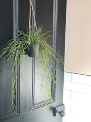 Faux hanging grass in pot