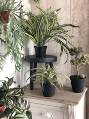 Faux plant bundle - plus free gift
