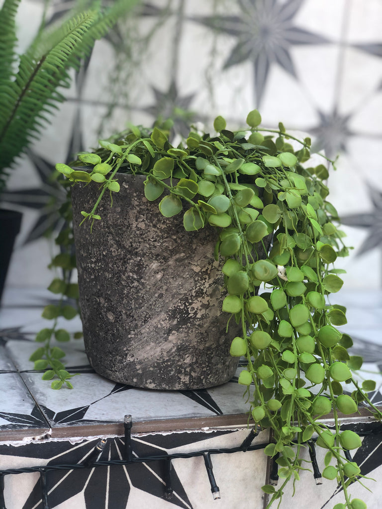 Green button fern plant in rustic pot