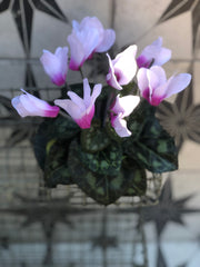 Pink faux cyclamen plant in pot