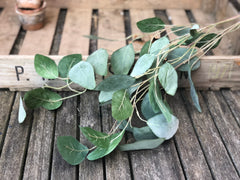 Silver dollar eucalyptus spray