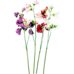 Faux Sweet pea - choice of colours