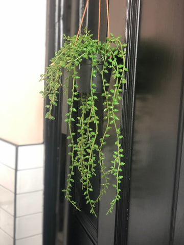 String of pearls hanging faux