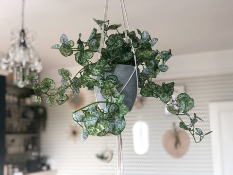 Hanging trail of hearts faux plant