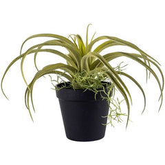 Tillandsia in pot - faux