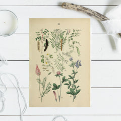 Collection of Vintage floral image - 3 sizes available