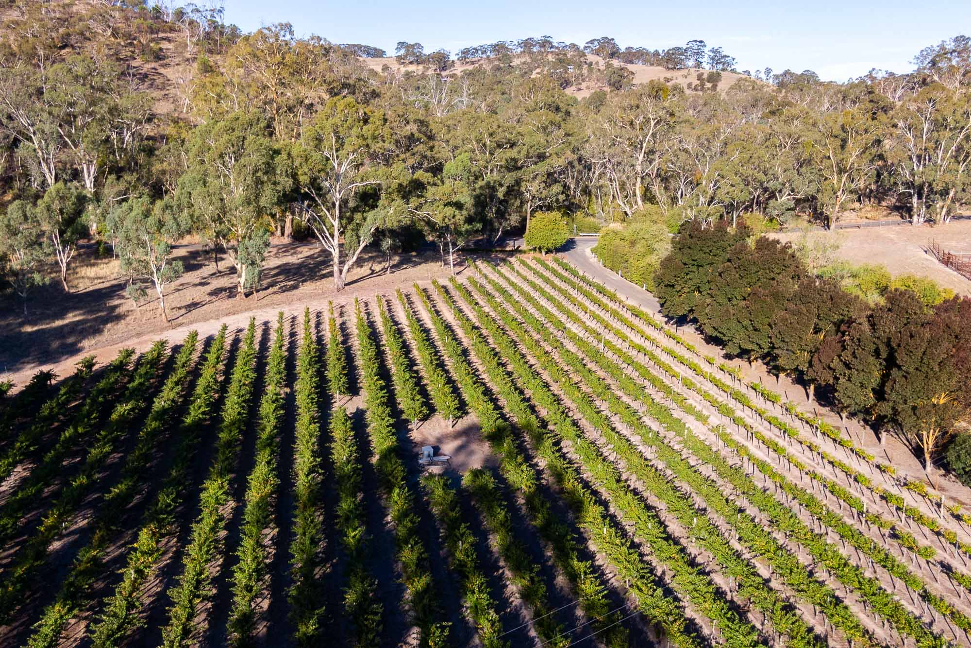 2018 Great Northern Semillon