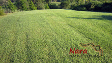 Load image into Gallery viewer, Nara Native Zoysia