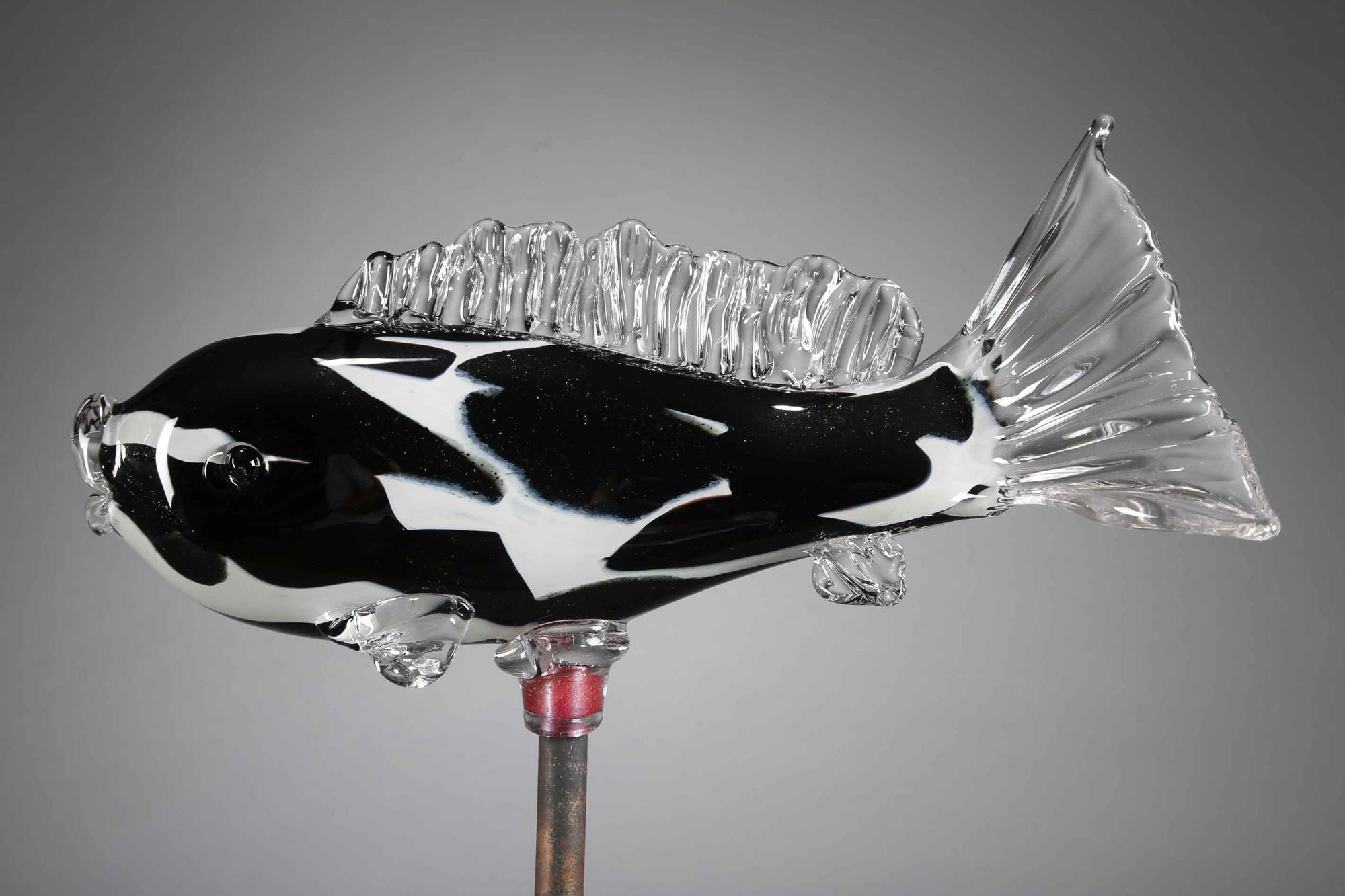 Fish Koi Black White