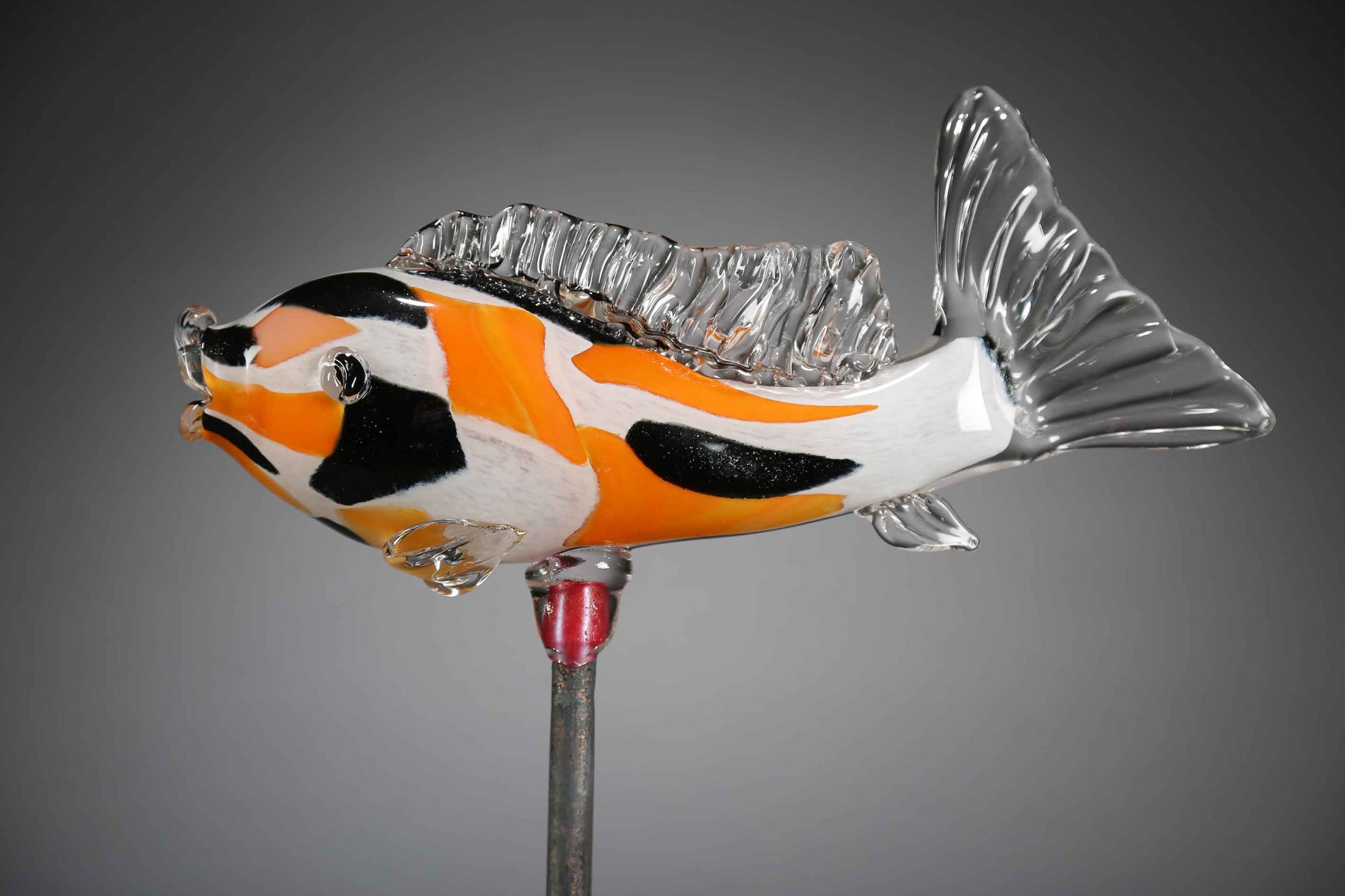 Fish Koi Orange Black White