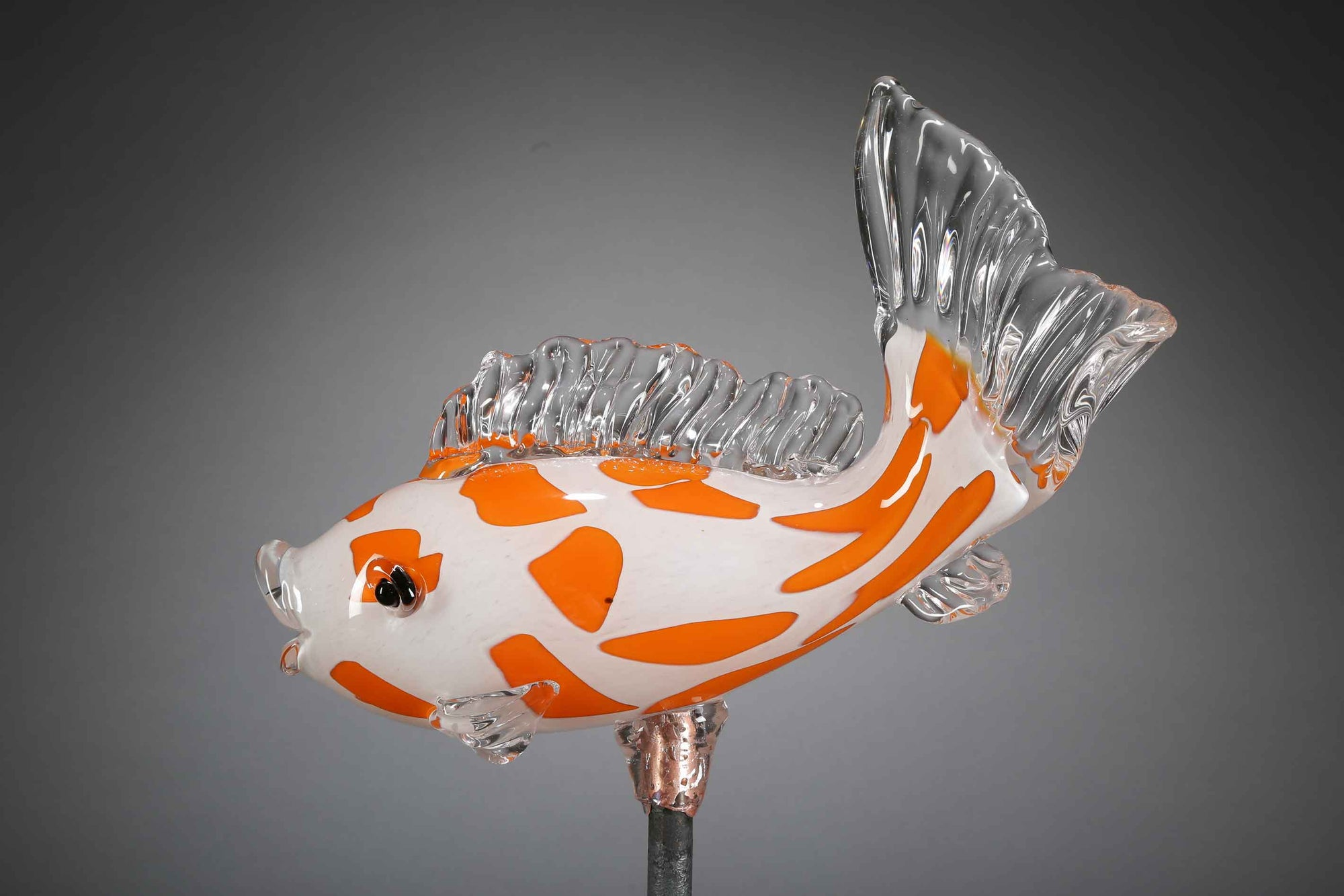 Fish Koi Orange White