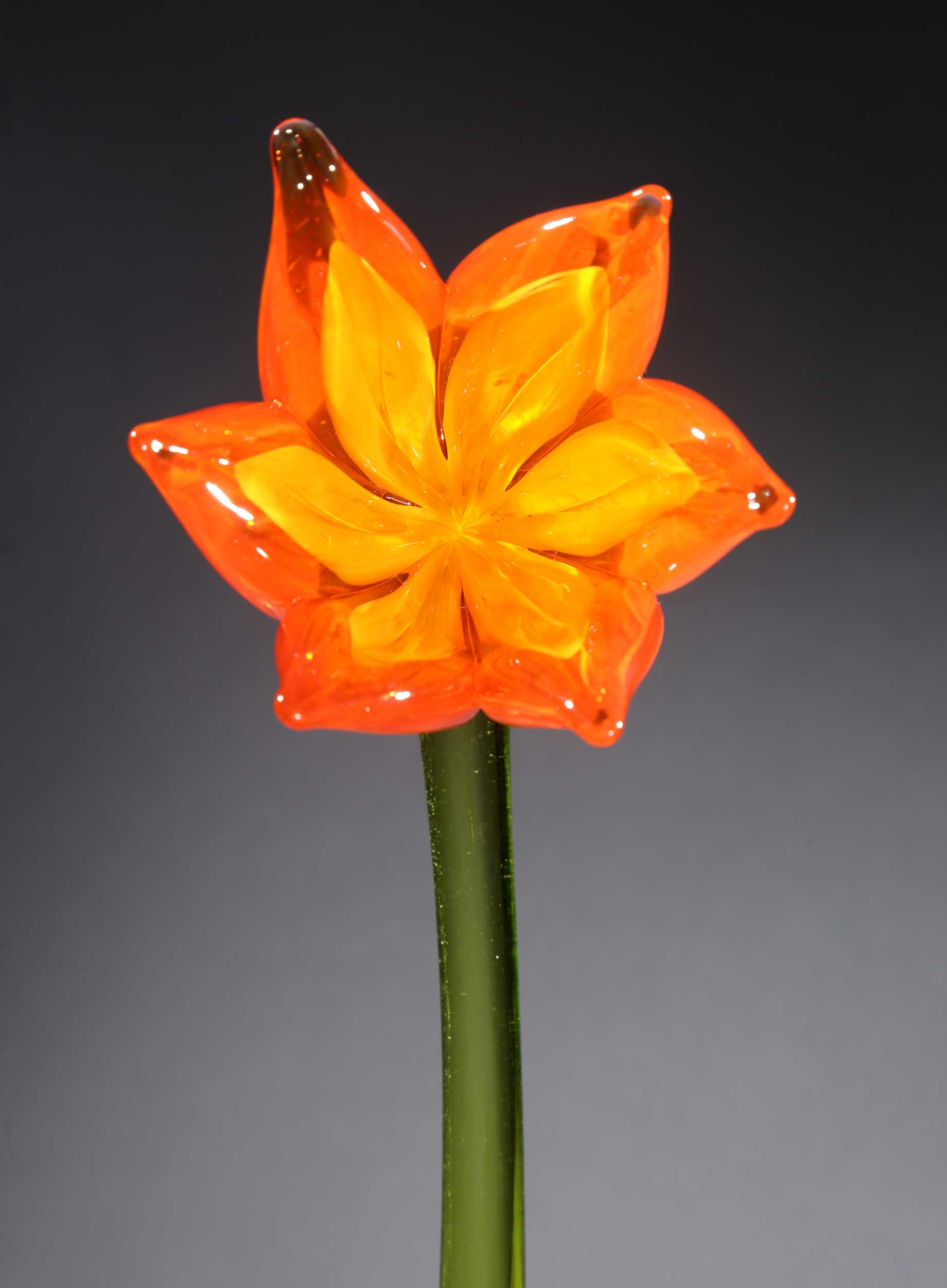 Flower Tulip Orange Yellow