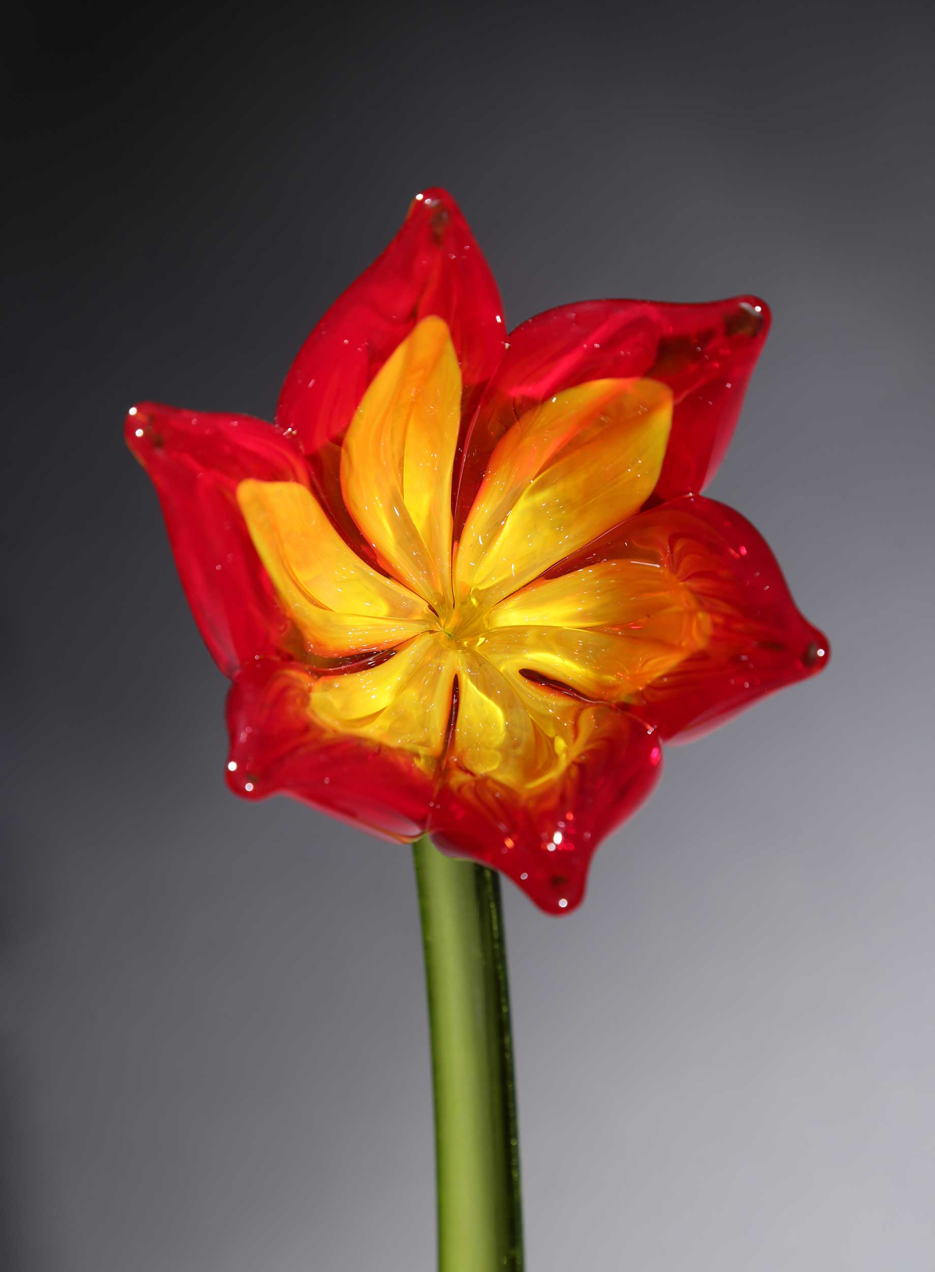 Flower Tulip Red Yellow