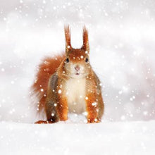 Load image into Gallery viewer, Crafty Gardens & Drones Stones Xmas Packs Squirrel Christmas Card - Squirrel 11806A 5021926118063