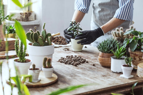 Gloved hands potting plants and dressing with rocks
