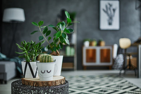 Plants on table in living room