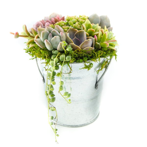 The Succulent Bucket