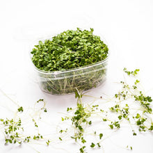 Load image into Gallery viewer, Broccoli Microgreens (50g)