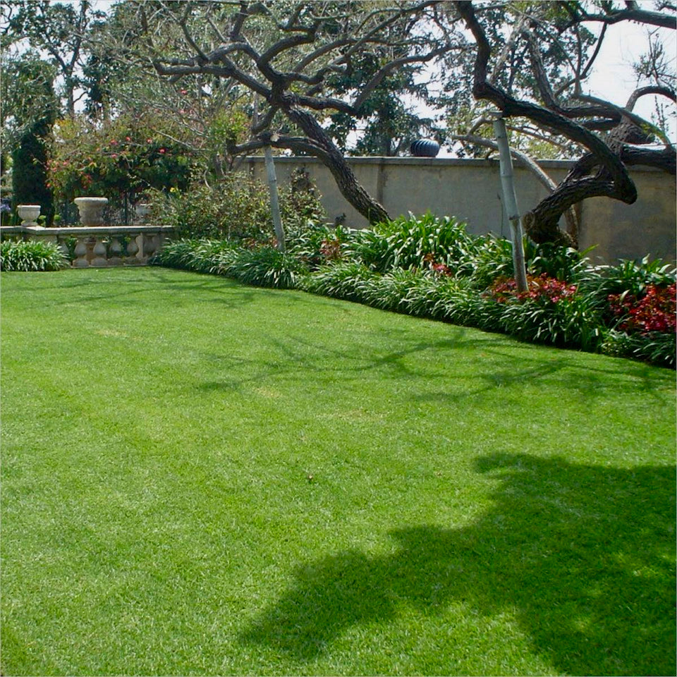 Turfgrass in a park in Los Angeles grown from Stover lawn seed.