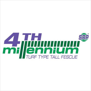 Turf type tall fescue 4th Millennium SRP