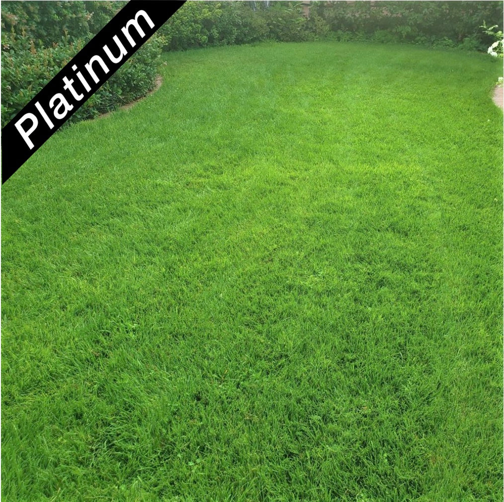 Beautiful lawn featuring 4th Millennium SRP turf-type, tall fescue, Platinum Quality seed.